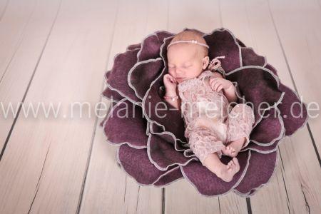 Babyfotograf - Melanie Melcher-71