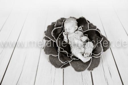 Babyfotograf - Melanie Melcher-72