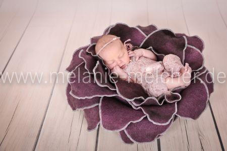 Babyfotograf - Melanie Melcher-83