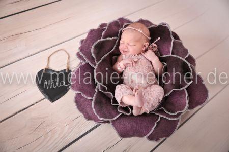 Babyfotograf - Melanie Melcher-86